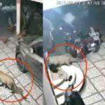 शिकार नहीं मिलने पर तेंदुआ ने कुत्ते पर ही किया हमला, रूह कांप जाएगी वीडियो देख कर (देखें वीडियो)
